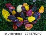 autumn apple tree leaves on a... | Shutterstock . vector #174875240