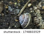 A Snail With A House In The...
