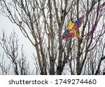 A Kite Caught In A Tree
