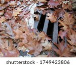 Yellow Autumn Leaves Blocked...