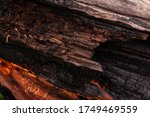 Bark Of Different Colors As A...
