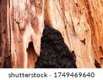 The Core Of An Old Burnt Tree...