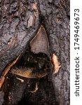 A Hole Inside A Tree. Old Wood...