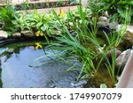 Small Pond Decoration In The...