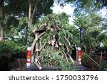 A Branch On A Pickup Truck.heap ...