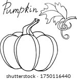 Vector Drawing Of Pumpkins....