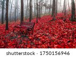 Red autumn forest park bench....