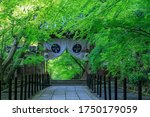 Buddhist Temple And Green Maple ...