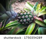Pineapple Tropical Fruit...