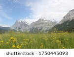 Green Natural Meadow In...
