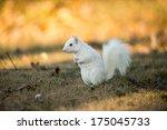 Rare White Squirrel Stashing...