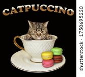 The Beige Cat Is Inside A...