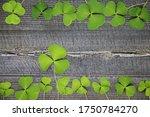 clover leaf on wood background. ... | Shutterstock . vector #1750784270