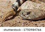 Closeup Of Rattlesnake Head And ...