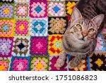 Cat On A Crochet Blanket...