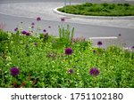 Flowerbed Of Colorful Colors Of ...