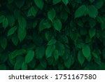 Dark Green Fresh Natural Leaves ...
