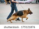 Stock photo walking dog with german shepherd with his master 175121876