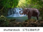 Elephant and watefall in the beautiful forest at Kanchanaburi province in Thailand, Amazing wild elephant in nature, landscape and jungl  of Thailand.