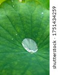 A Drop Of Clear Rain Water On A ...