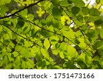 green leaves on a tree branch | Shutterstock . vector #1751473166