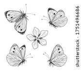Hand Drawn Butterfly Set...