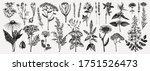 medicinal herbs collection.... | Shutterstock .eps vector #1751526473