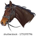 Stock vector horse head 175195796