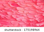 Pink Flamingo Feathers