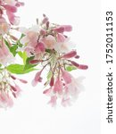 branch of pink flowers with...   Shutterstock . vector #1752011153