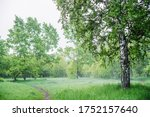 Scenic landscape with nice tree in summer forest in light haze. Misty green scenery with beautiful birch in park in soft light. Wonderful nature view with tree close-up in early morning. Mist on grass