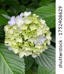 Small photo of Beautiful blooming flowers. A transient and beautiful flower.