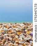 seashells close up and blue sky | Shutterstock . vector #1752447173