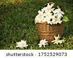 Bunch Of Gardenia Flowers ...