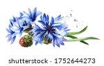 Blue Cornflowers. Hand Drawn...