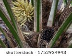 The Palm Tree And Palm Seed The ...