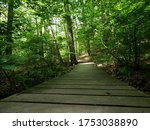 A Wooden Bridge Before A Fores...