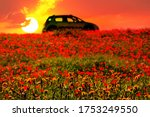 Flowering Hill Under Red Yello...