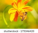 Beautiful Bee On Yellow Flower