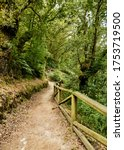 Small photo of Aceas hiking route in Sarria Lugo Galicia, in spring, dirt roads surrounded by autochthonous ancient trees, oaks, chestnut trees