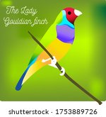The Lady Gouldian Finch Vecto...