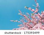Artificial Sakura Flowers  Is...