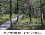 Bog Paths  Paths Made Of Woode...
