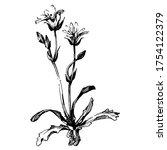 wild flowers isolated... | Shutterstock .eps vector #1754122379