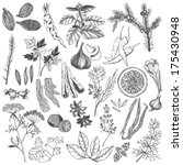 anise,aroma,asian,background,basil,caraway,cardamom,cardamon,clove,cumin,dill,drawing,drawn,engraved,fennel