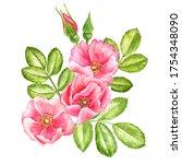 watercolor drawing wild rose...   Shutterstock . vector #1754348090