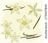 set of hand drawn vanilla... | Shutterstock .eps vector #175447844