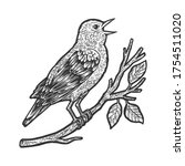 Nightingale Bird Sketch...