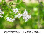 blooming tree branch in the... | Shutterstock . vector #1754527580