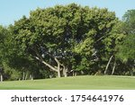Golf Course With Green Grass...